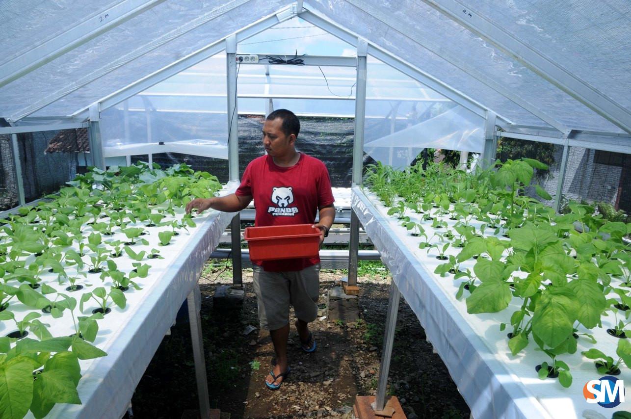 manfaat tanaman hidroponik