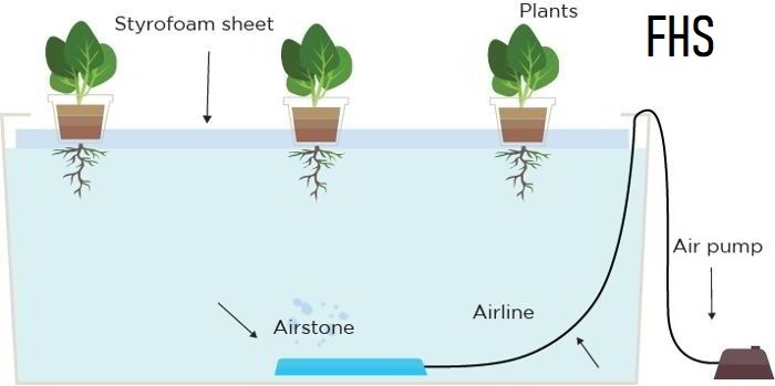 Floating Hydroponic System (FHS)