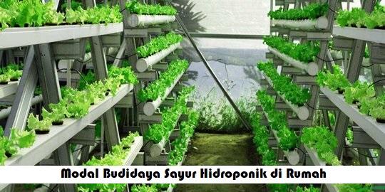 Modal Budidaya Sayur Hidroponik di Rumah