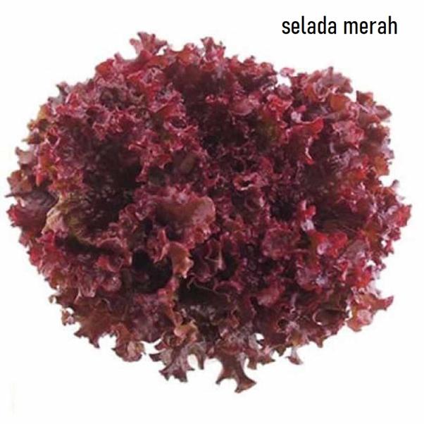 Selada Merah